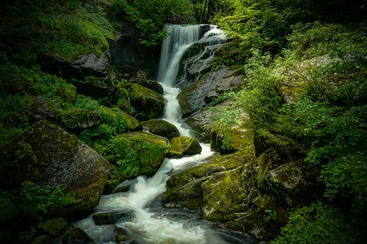 Фото бесплатно дремучий лес, мох, ручей