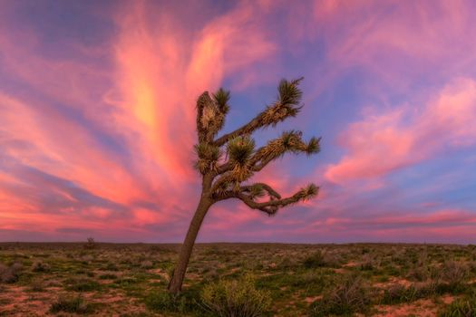 Lonely tree on a background of pink clouds · free photo