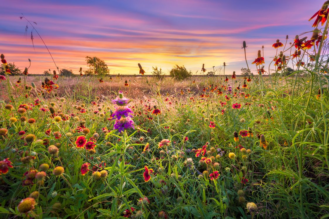 Photos for free landscape, flower field, sunset - to the desktop