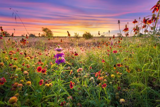 Photo free landscape, flower field, sunset