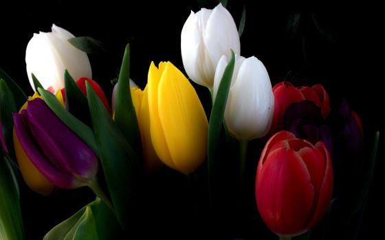 Фото бесплатно цветы, природа, чёрный