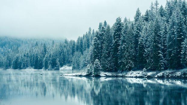 Фото бесплатно живописный район, лес, снег