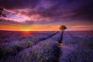 Бесплатные фото закат,поле,лаванда,дерево,цветы,пейзаж,лавандовое поле