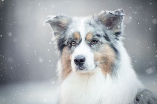 A dog in the snow · free photo