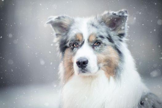 Собака в снегу · бесплатное фото