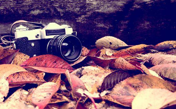 Фото бесплатно листья, осень, векторные иллюстрации