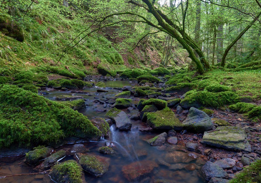 Лесной ручей · бесплатное фото