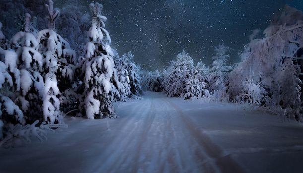 Бесплатные фото Ночь в зимнем лесу,ночь,зима,снег,дорога,деревья,пейзаж