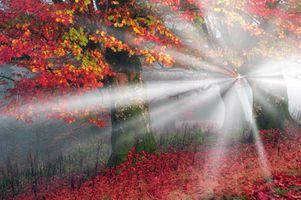 Бесплатные фото осень,лес,деревья,пейзаж,солнечные лучи,природа,осенние краски