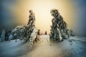 Елки под натиском снега