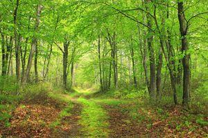 Заставки дорога, весенний день, цветущая растительность