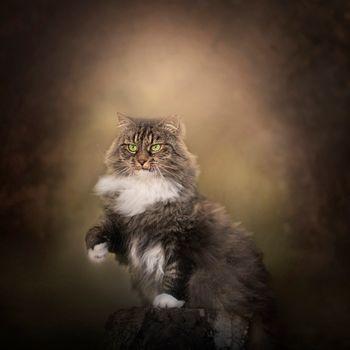 Фото бесплатно кот, кошка, поза