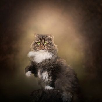 Заставки кот, кошка, поза