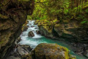 Бесплатные фото лес,река,скалы,деревья,природа,пейзаж