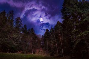 Заставки ночь,луна,небо,лес,деревья,природа,пейзаж