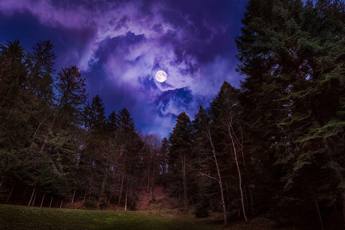 фотографом ночь в лесу в полнолуние картинки кладите четверть чайной
