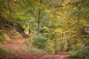 Фото бесплатно осень, лес, дорога