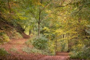 Заставки осенние листья, пейзаж, осенние краски