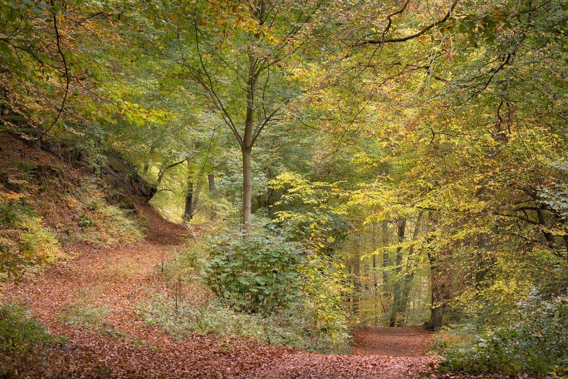 Фото бесплатно осень, лес, дорога, осенние краски, осенние листья, краски осени, деревья - на рабочий стол