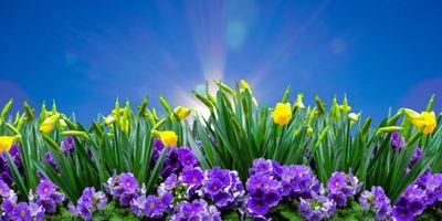 Фото бесплатно природы, сезон, весна