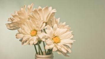 Photo free chamomile, bouquet, vase