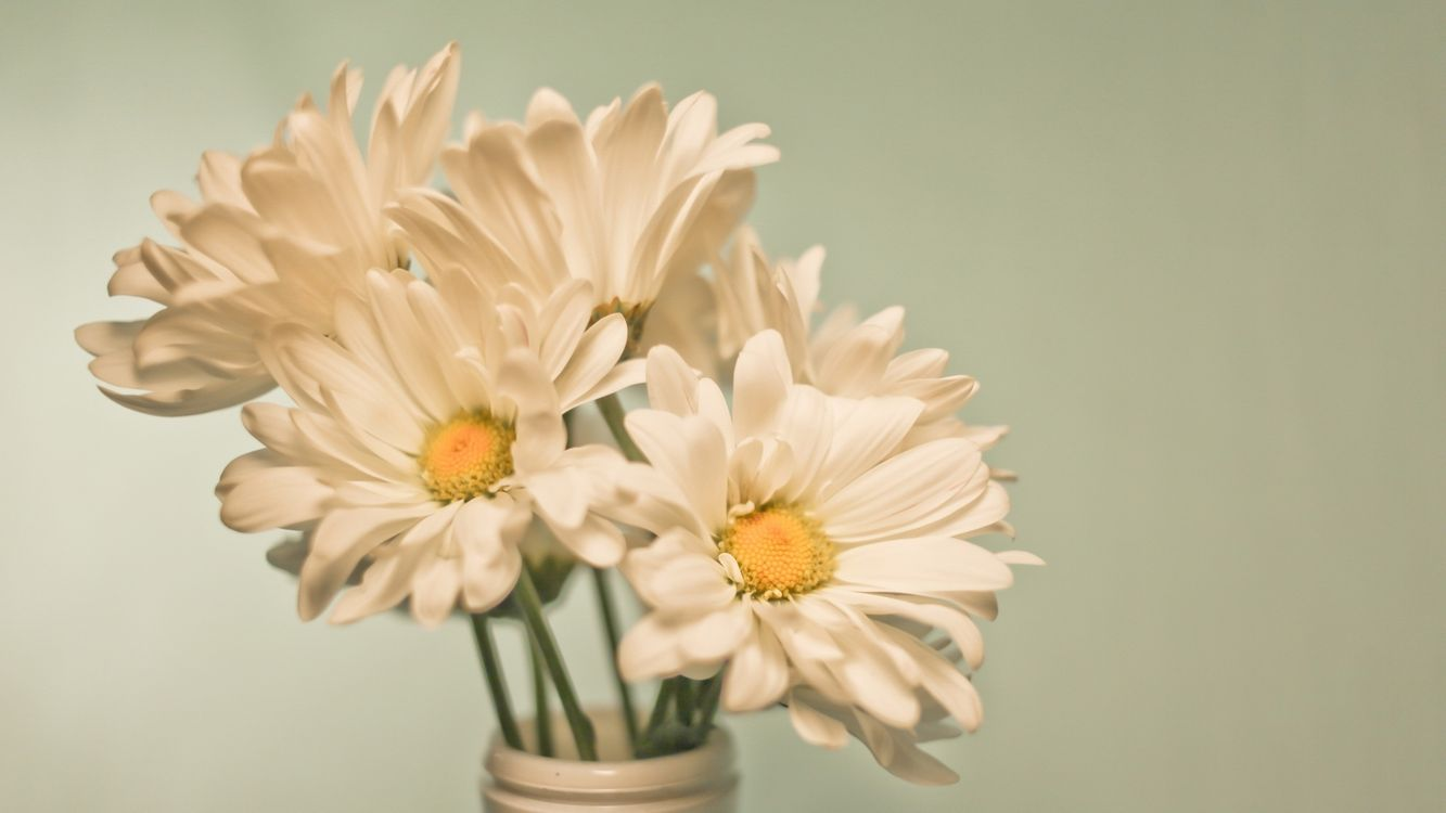 Free photo chamomile, bouquet, vase - to desktop