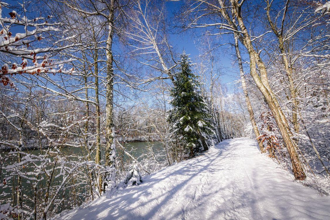 Снежная зима · бесплатное фото