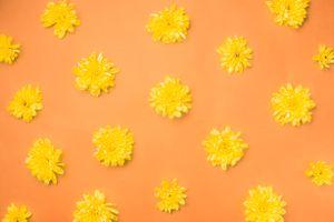 Фото бесплатно бутоны, цветы, декор