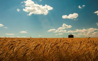 Украинские поля с пшеницей · бесплатное фото