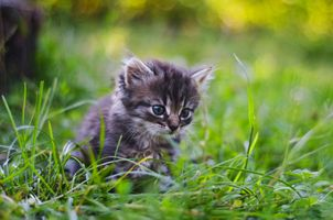 Фото бесплатно котёнок, лапочка, прелесть