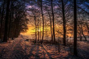Фото бесплатно зимний рассвет, парк, деревья