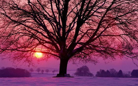 Фото бесплатно пейзажи, naturee, времена года
