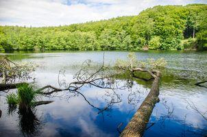 Фото бесплатно река, деревья, лес, озеро, вода, природа, пейзаж