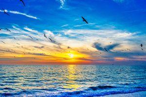 Фото бесплатно птица, закат, волны