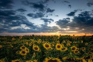 Фото бесплатно цветы, облака, закат