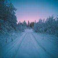 Заставки зима, закат, лес
