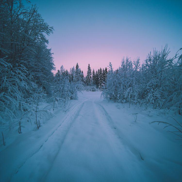 Фото бесплатно зима, закат, лес, деревья, сугробы деревья, дорога, пейзаж, пейзажи