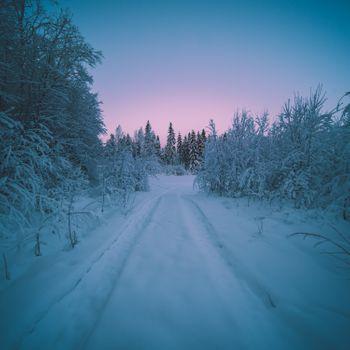 Фото бесплатно закат, лес, снег