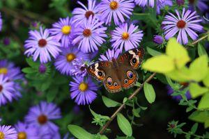 Фото бесплатно цветы, бабочка, ветка, природа