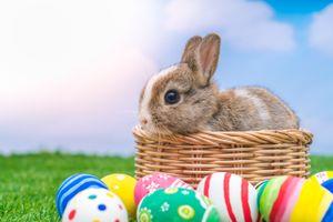 Фото бесплатно Пасхальный заяц, пасхальные обои, воистину воскресший
