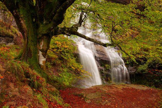 Photo free autumn, tree, waterfall