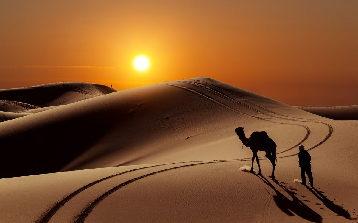 Фото бесплатно верблюд, человек, сахара, песок, холмы, пустыня, красиво, красота, магия, люди, солнце, животные - скачать на рабочий стол