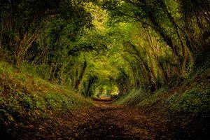 Фото бесплатно пейзаж, парк, тоннель