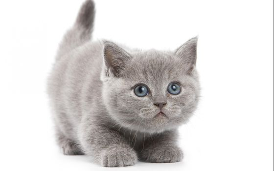 Фото бесплатно детка, кот, кошки