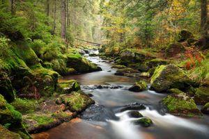 Фото бесплатно ручей, лето, лес