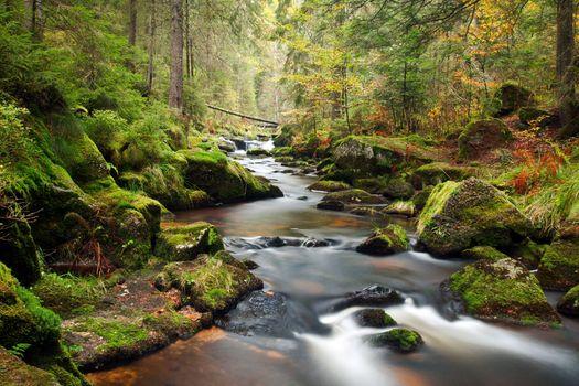 Заставки ручей, лето, лес