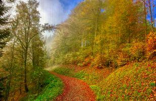 Заставки Парк, осенние листья, дорога