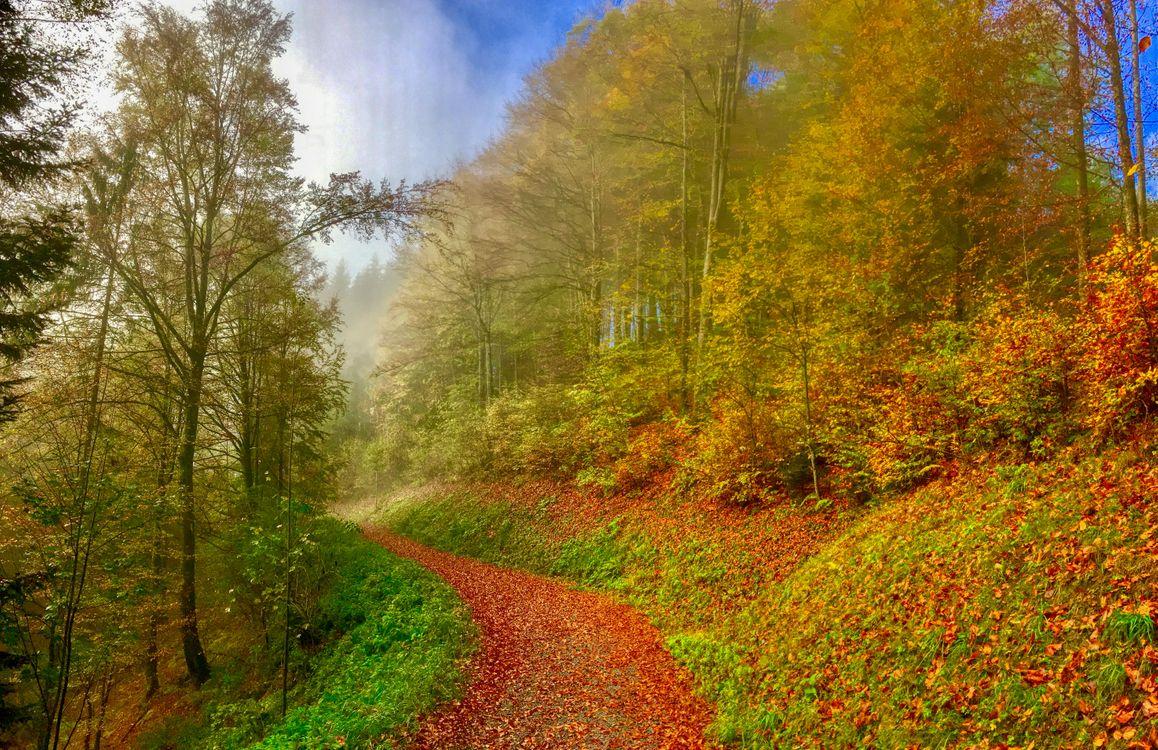 Фото бесплатно осень, парк, дорога, лес, деревья, природа, осенние листья, осенние краски, пейзаж, Осенний туман в лесу, Hocheck, возле Обераудорф, Бавария, Германия, пейзажи