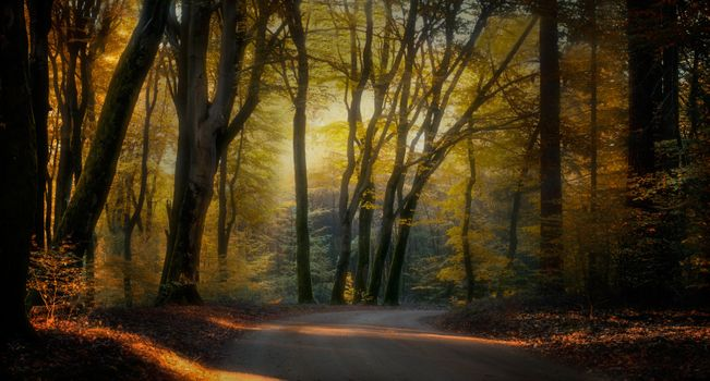 Road in the autumn park · free photo