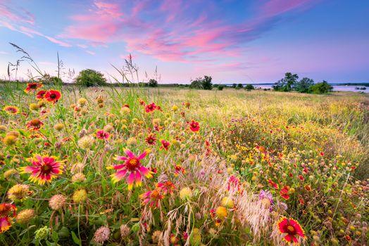 Фото бесплатно поле, цветы, цветочное поле